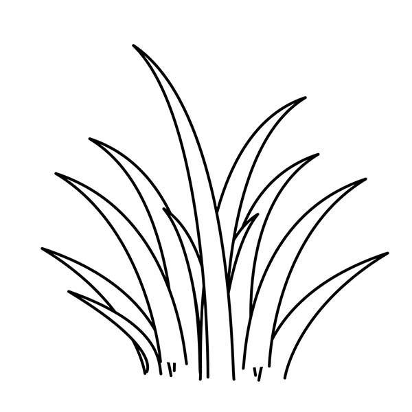 plants world grass coloring pages  color luna (