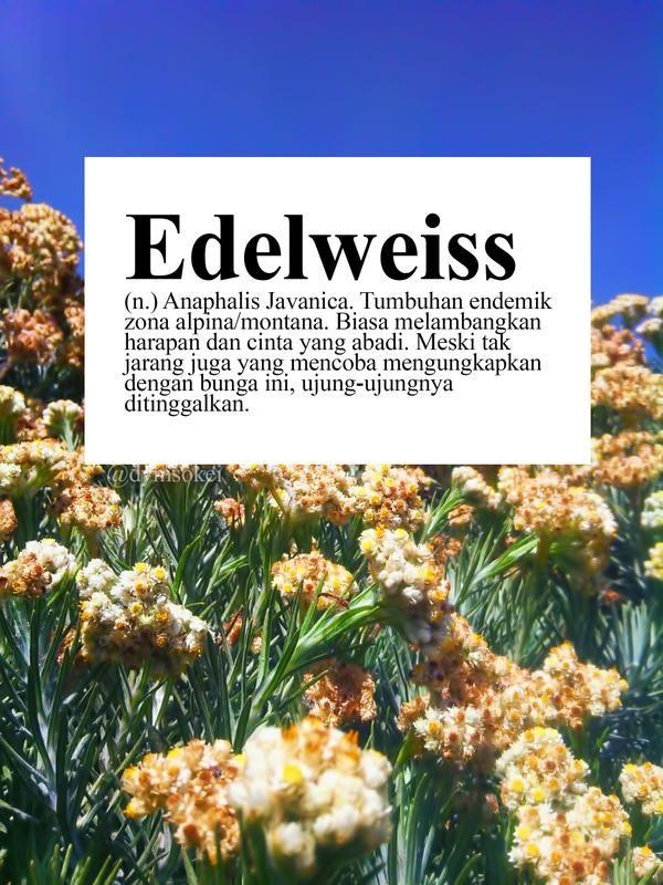Download 95 Koleksi Wallpaper Tumblr Edelweis Foto Paling Keren
