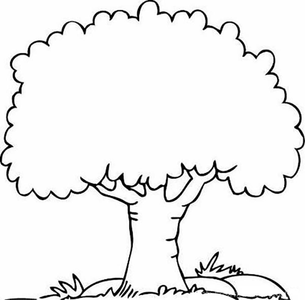 Big Tree Trees Coloring Pages Pinterest Big Tree Coloring Page