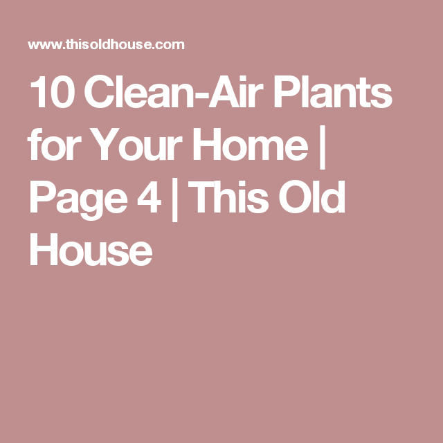 10 Clean-Air Plants for Your Home | Page 4 | This Old House