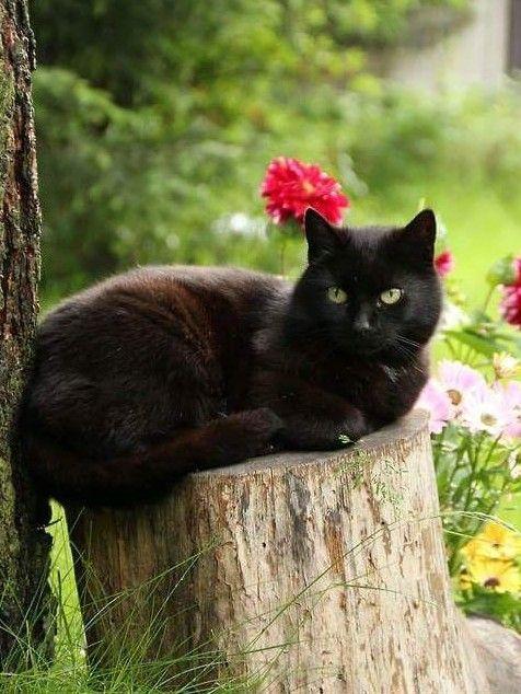 katte elsker dating website hvor ofte skal en fyr din dating ringe til dig