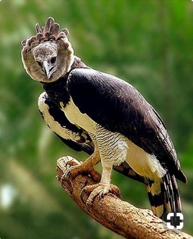 Pin By Dr Rabab Hussein On الطيور الجارحة Birds Pet Birds Birds Of Prey