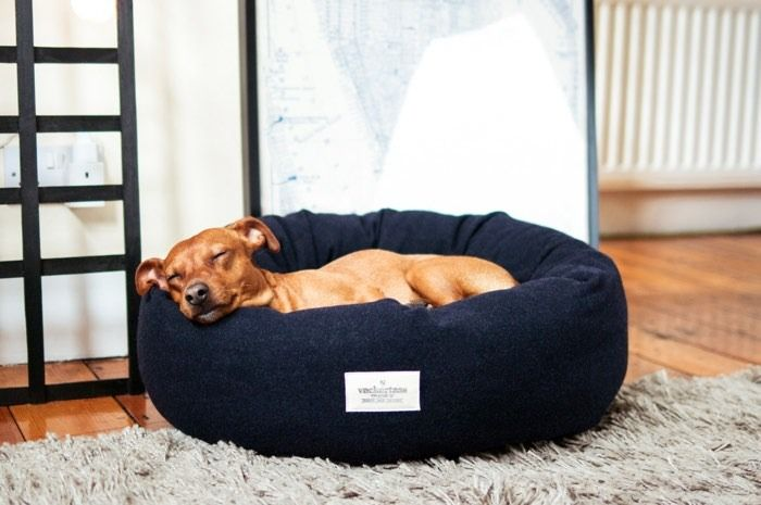 How To Choose The Right Dog Bed Cool Dog Beds Dog Bed Popular Dog Beds