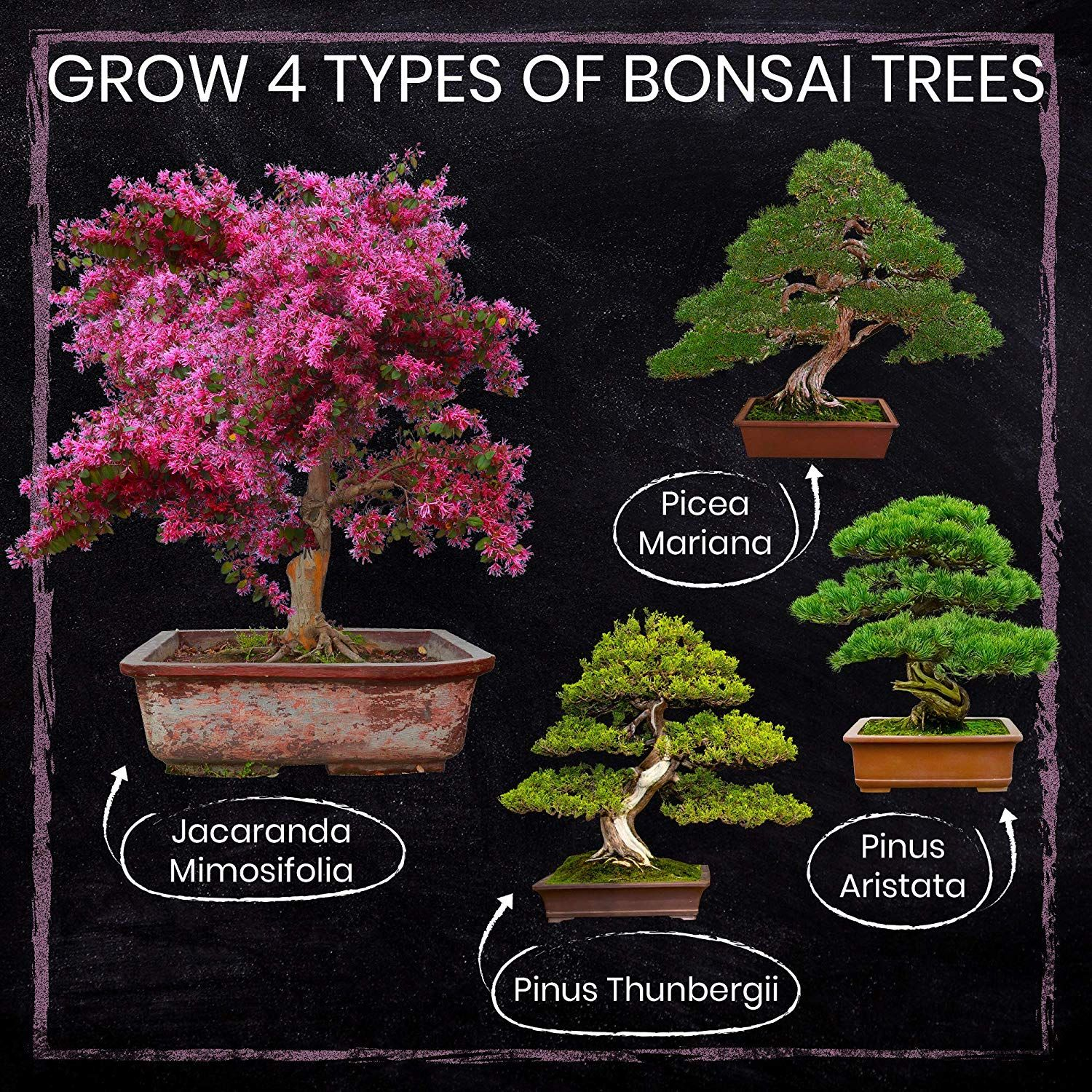 Amazon Com Nature S Blossom Bonsai Tree Kit Grow 4 Types Of Bonsai Trees From Seed Indoor Outdoor Ga In 2020 Bonsai Tree Types Bonsai Tree Bonsai Trees For Sale