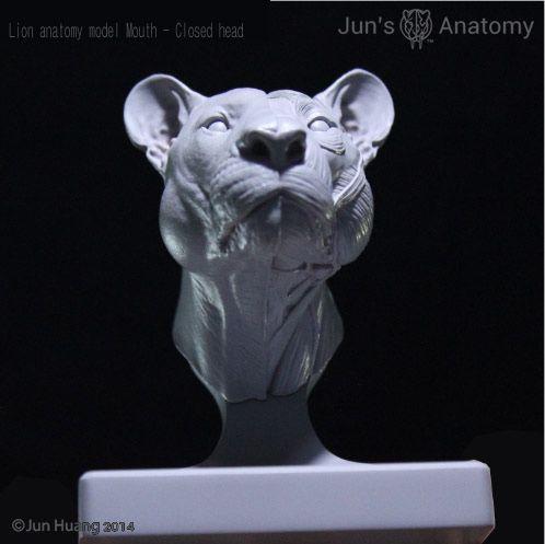 Jun\'s Anatomy Big Cats Anatomy models by Jun Huang — Kickstarter ...
