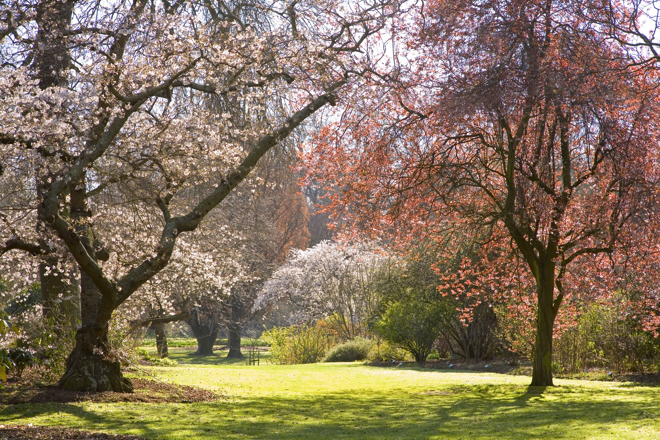 When blossom trees turn hagley park into a fairyland for Landscape gardeners christchurch