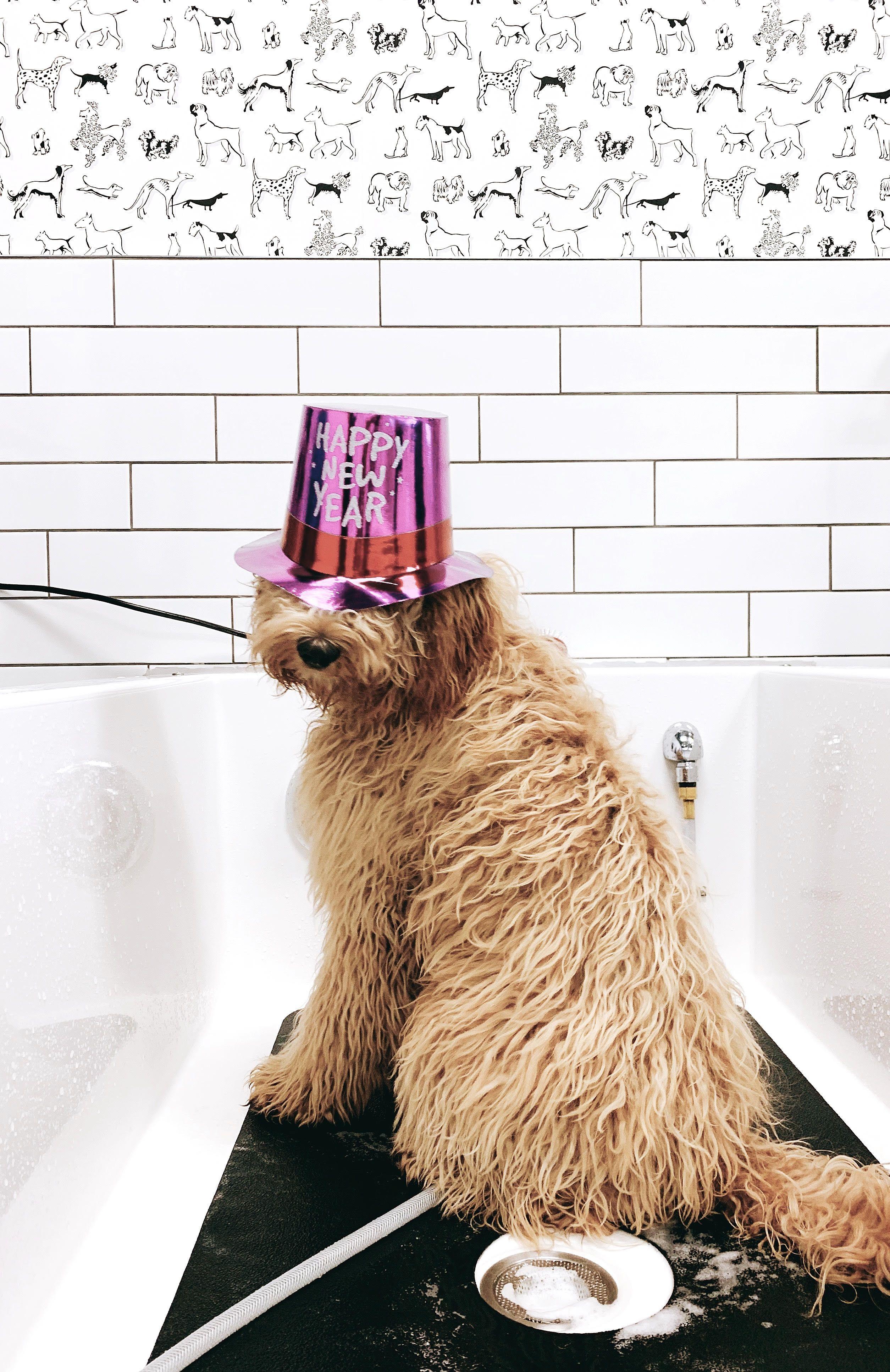 Self Service Dog Wash Dog Wash Service Dogs Pet Store
