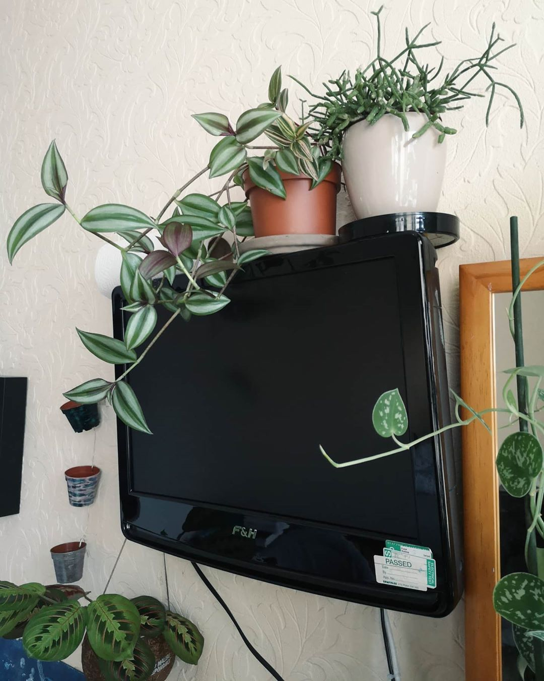 TV? No, thank you. I'd rather look at my plants instead