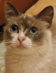 Adopt Gretchen On Pet Finder Cats Adoption