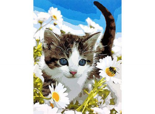 Картина по номерам «Котенок в ромашках» | Окрашенные стены ...