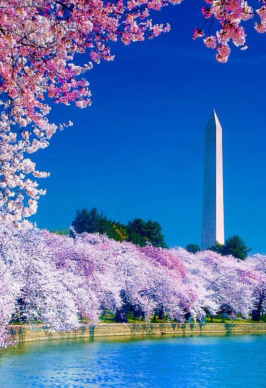 Cherry Blossom Festival Washington D C Beautiful Places Beautiful World Cherry Blossom Festival