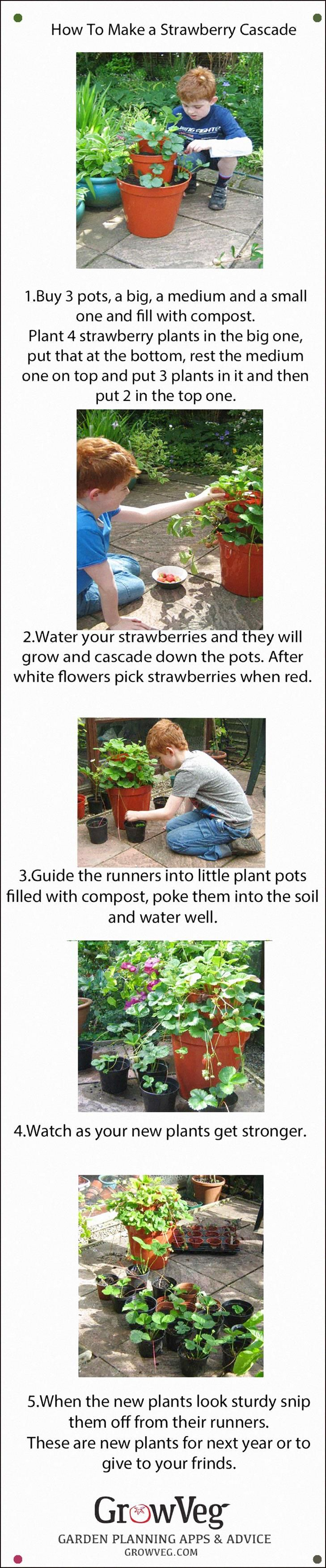 How To Make A Strawberry Cascade Using 3 Different Size Pots And Then After Having Picked The Strawberr Strawberry Plants Gardening For Kids Strawberry Runners
