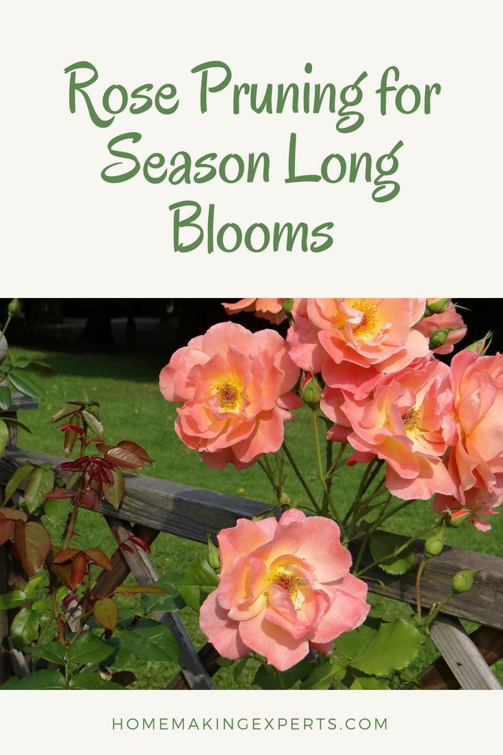 Proper Rose Pruning Encourages Flowering Allentuck Landscaping Gardening Blog Prune Water Features In The Garden