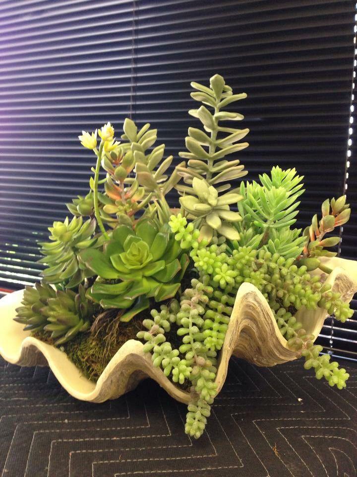 Succulent Arrangement With Seashell Vase Designed By Interior Plant Service,  Inc.