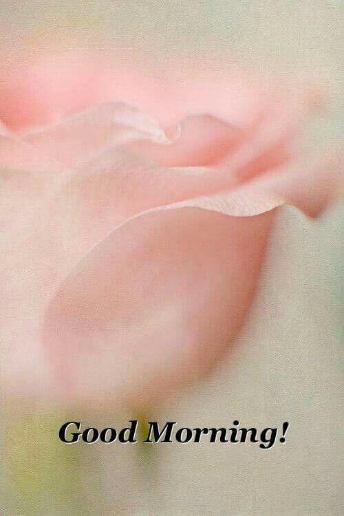 Pin By Nikiwellington Kadfreed On Good Morning Or Good Night Good Morning Images Good Morning My Love Morning Quotes