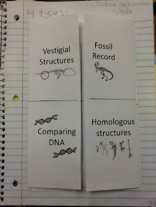 Evidence for Evolution Foldable Notes and Interactive ...