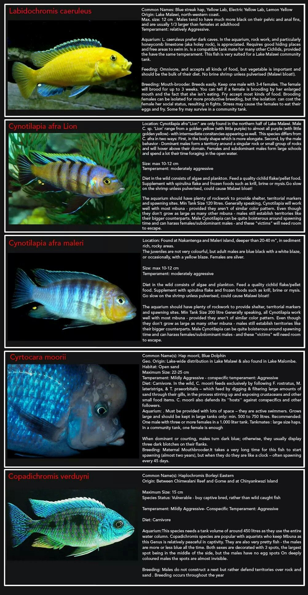 Pin by rebecca fryer on fish and plants pinterest fish discus nvjuhfo Gallery
