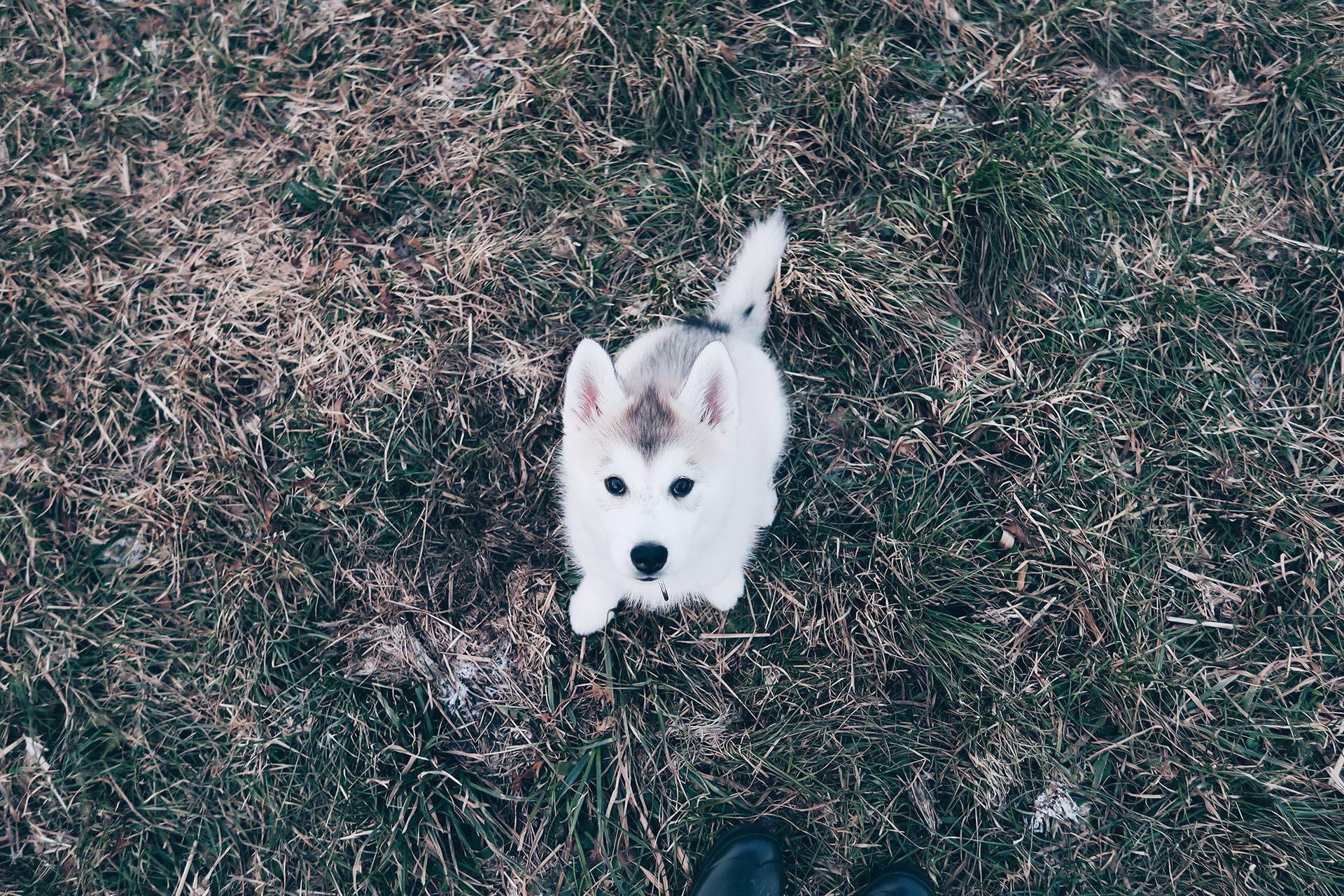 Hunde Facts Zur Sibirischen Husky Dame Sky Alltag Mit Hund Leben Mit Hund Hundeblog Hundeblogger Osterreich Hund Sibirischer Husky Husky Susseste Haustiere
