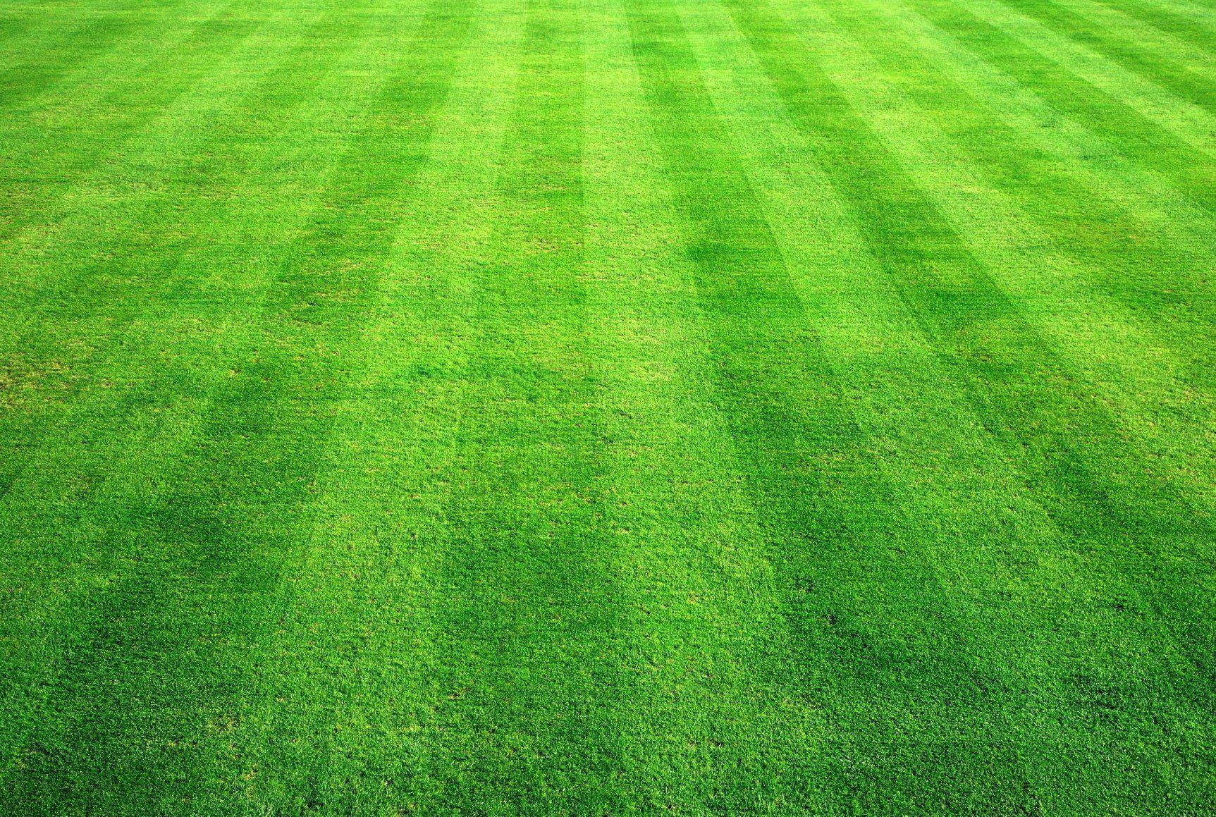 how to cut long grass in garden