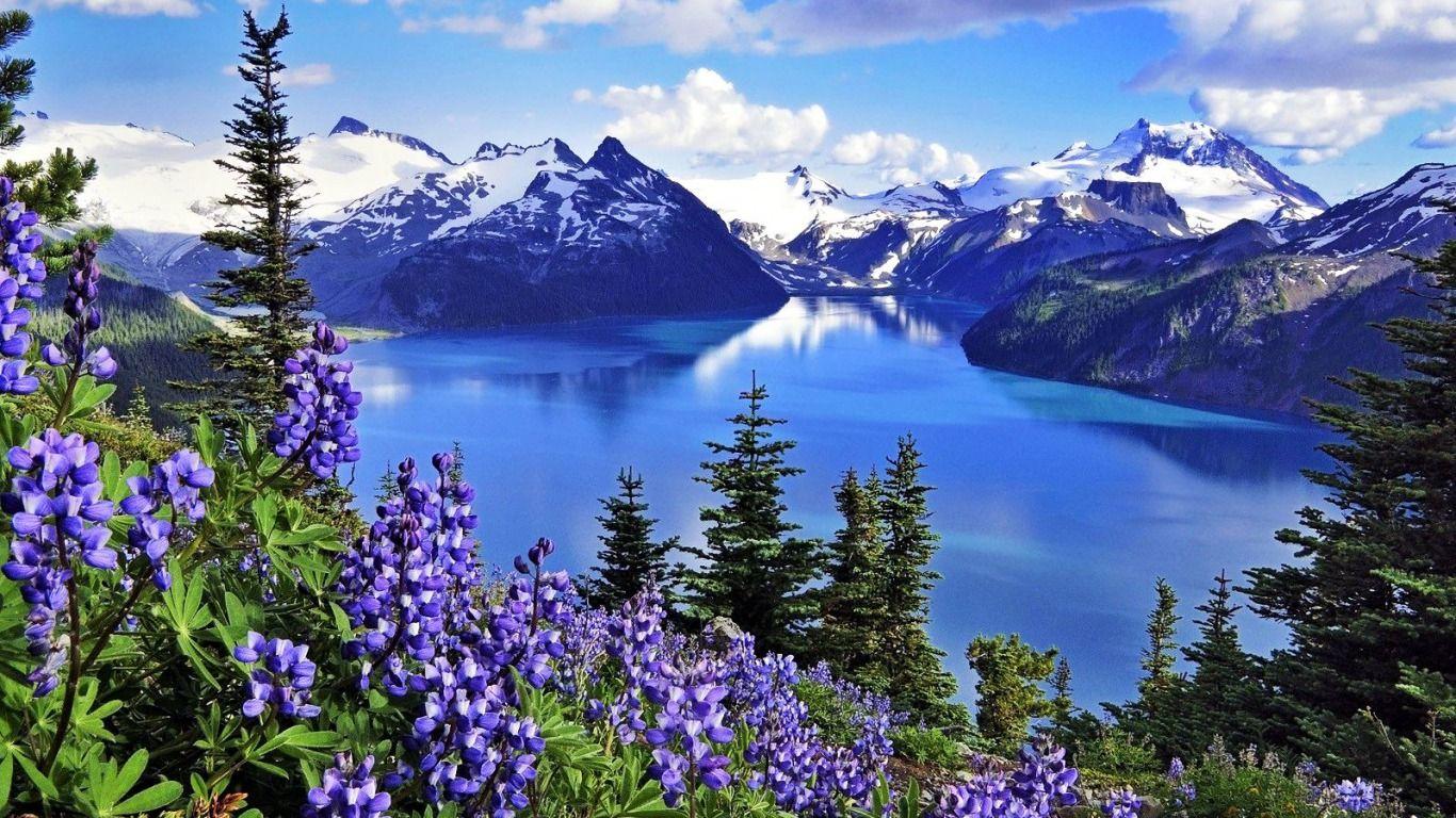 Landscape Spring Wildflower Canada Lake Mountain