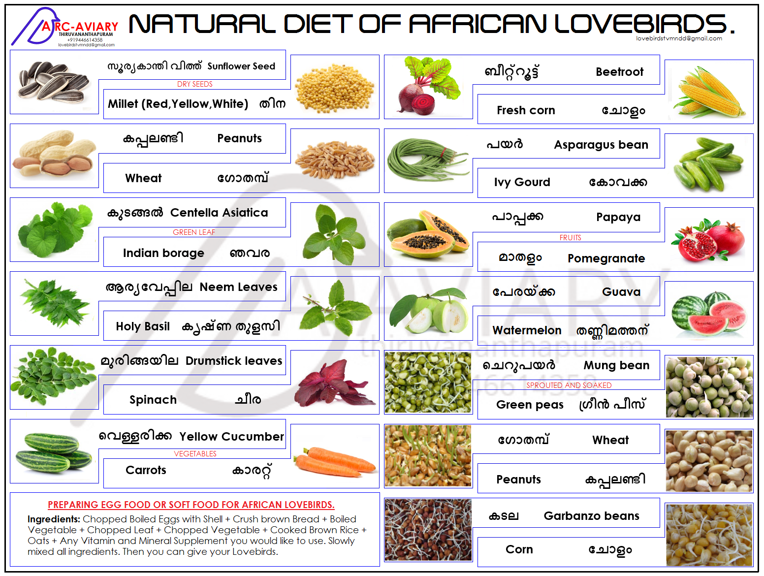 Natural Diet Of African Lovebirds African Lovebirds Parrot Diet Natural Diet