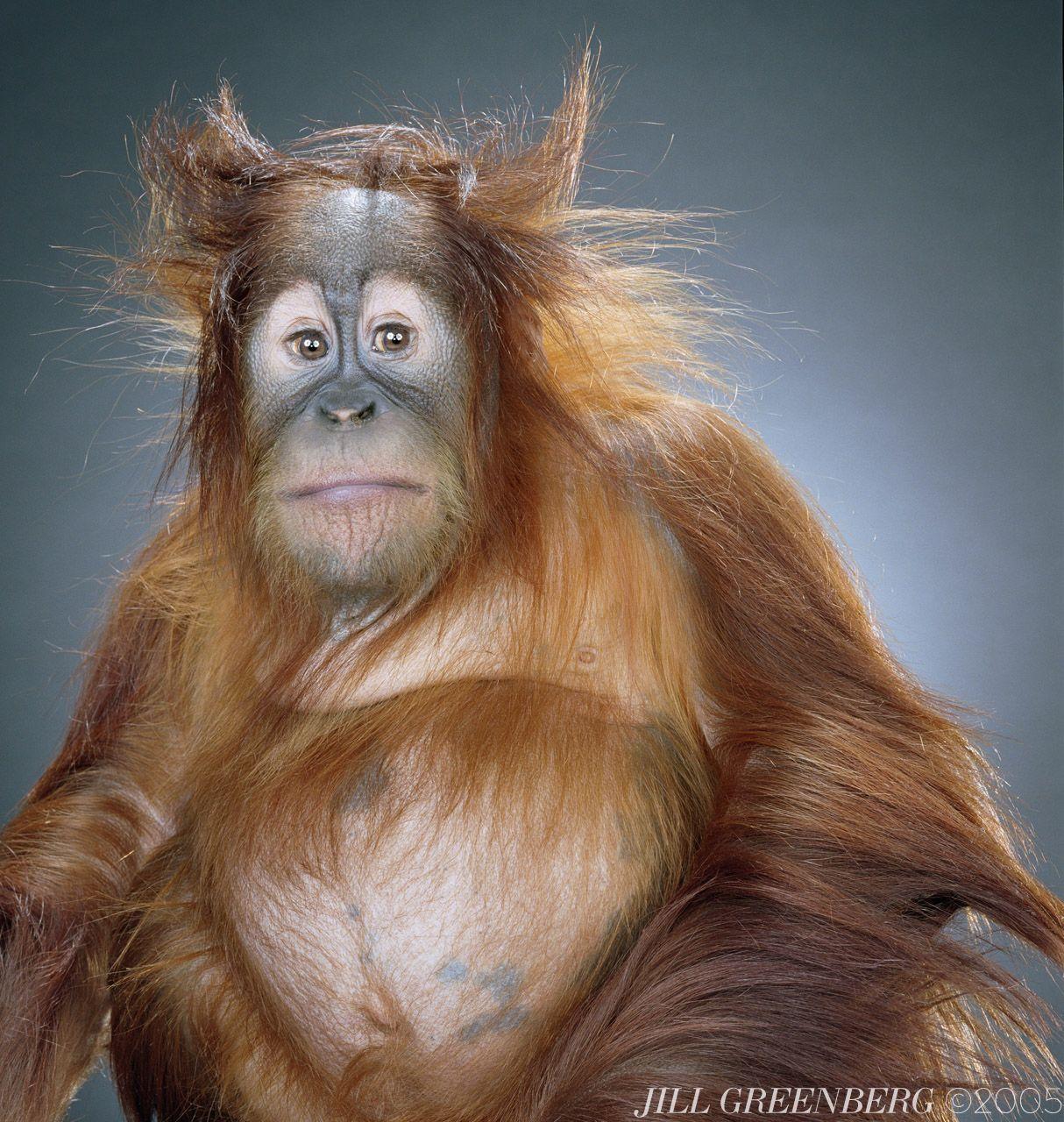 28 best monkey buzzniz images on pinterest jill greenberg