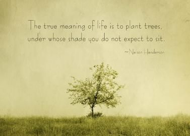 The True Meaning Of Life Tree Of Life Meaning Tree Quotes