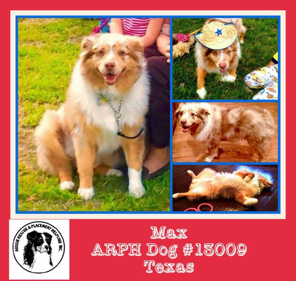 Aussierescue Placement Helpline Arph Available Dogs By