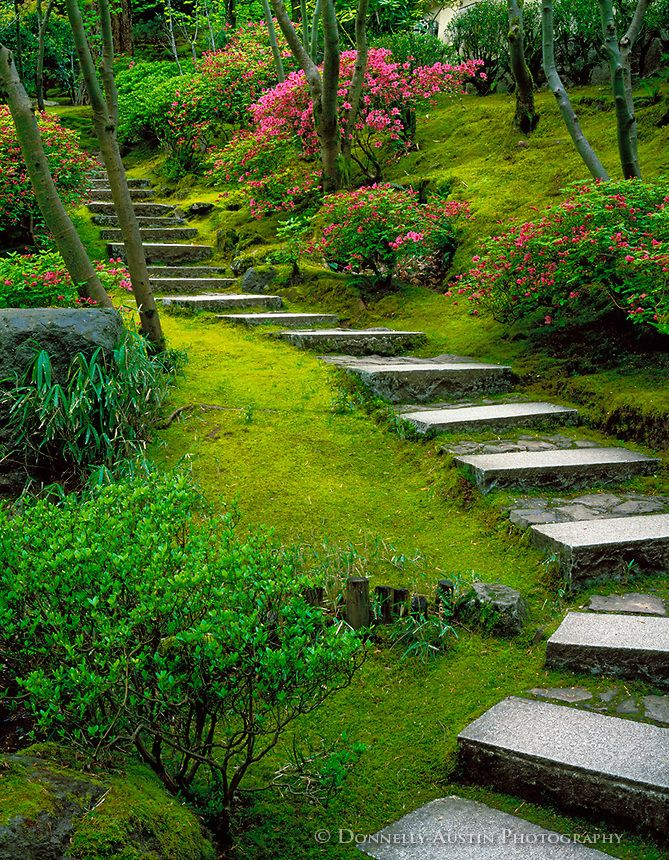 Portland Or Br Stone Steps And Flowering Azaleas On The Mossy Hillside Of The Natural Garden T Farmhouse Landscaping Japanese Garden Hillside Landscaping