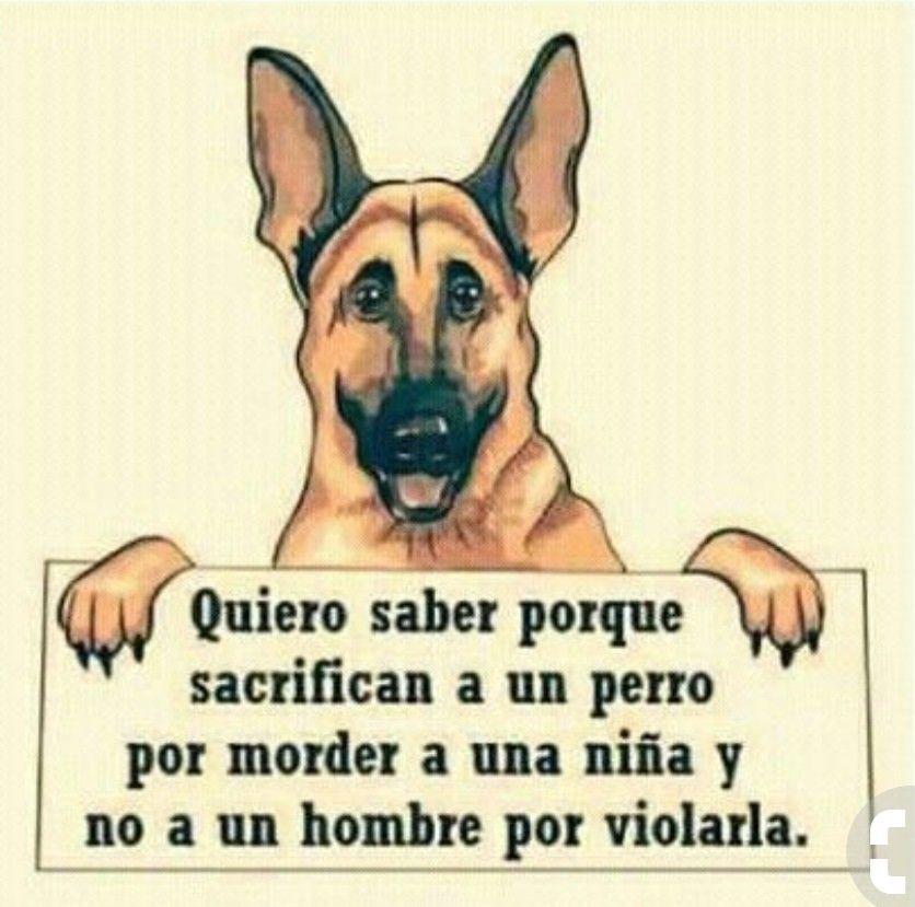 Por Que No Lo Hacen Animales Y Mascotas Animales Hacen Mascotas Por Que Perros Animales Frases Perros Frases
