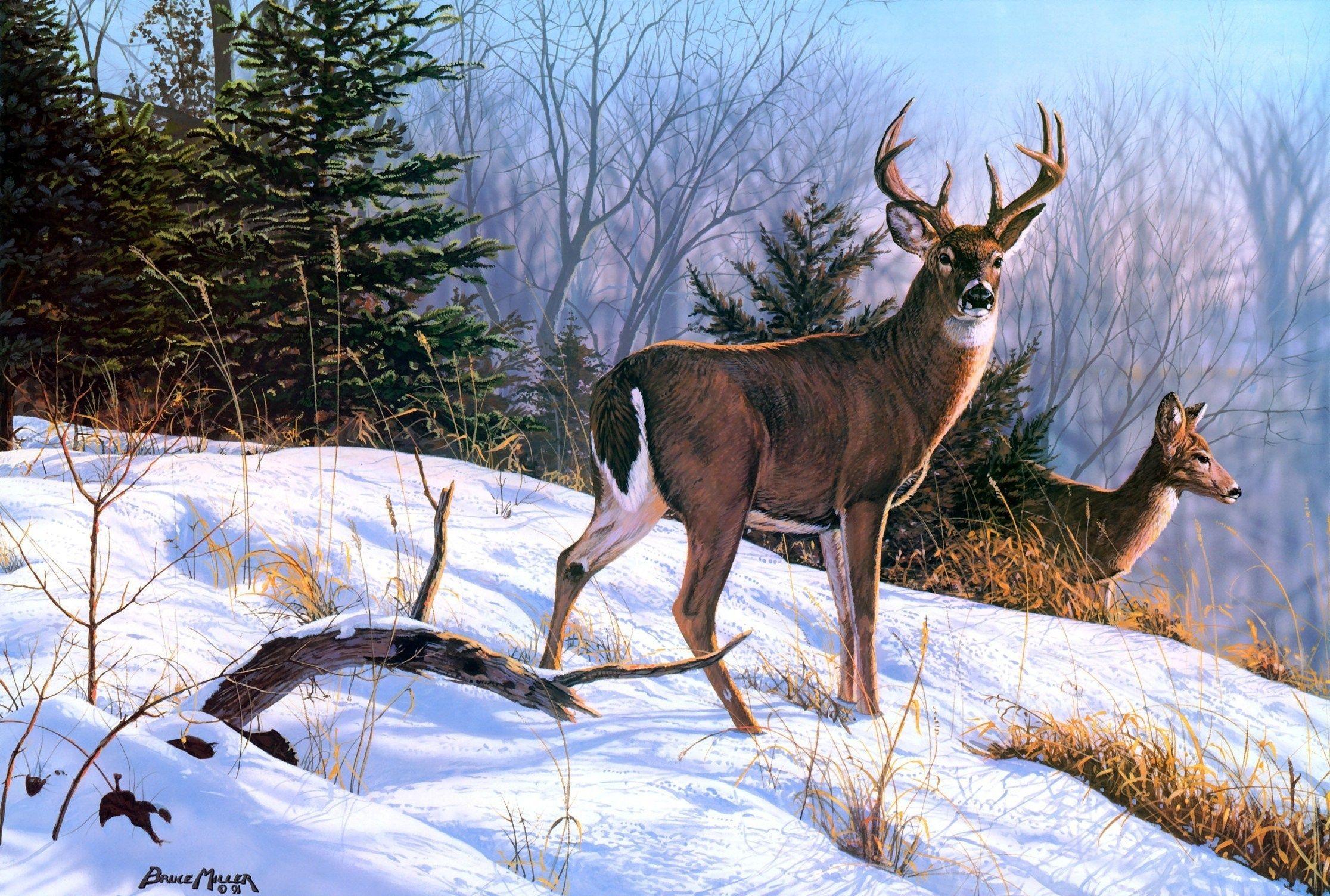 картина олени в лесу - Поиск в Google | Олень искусство ...