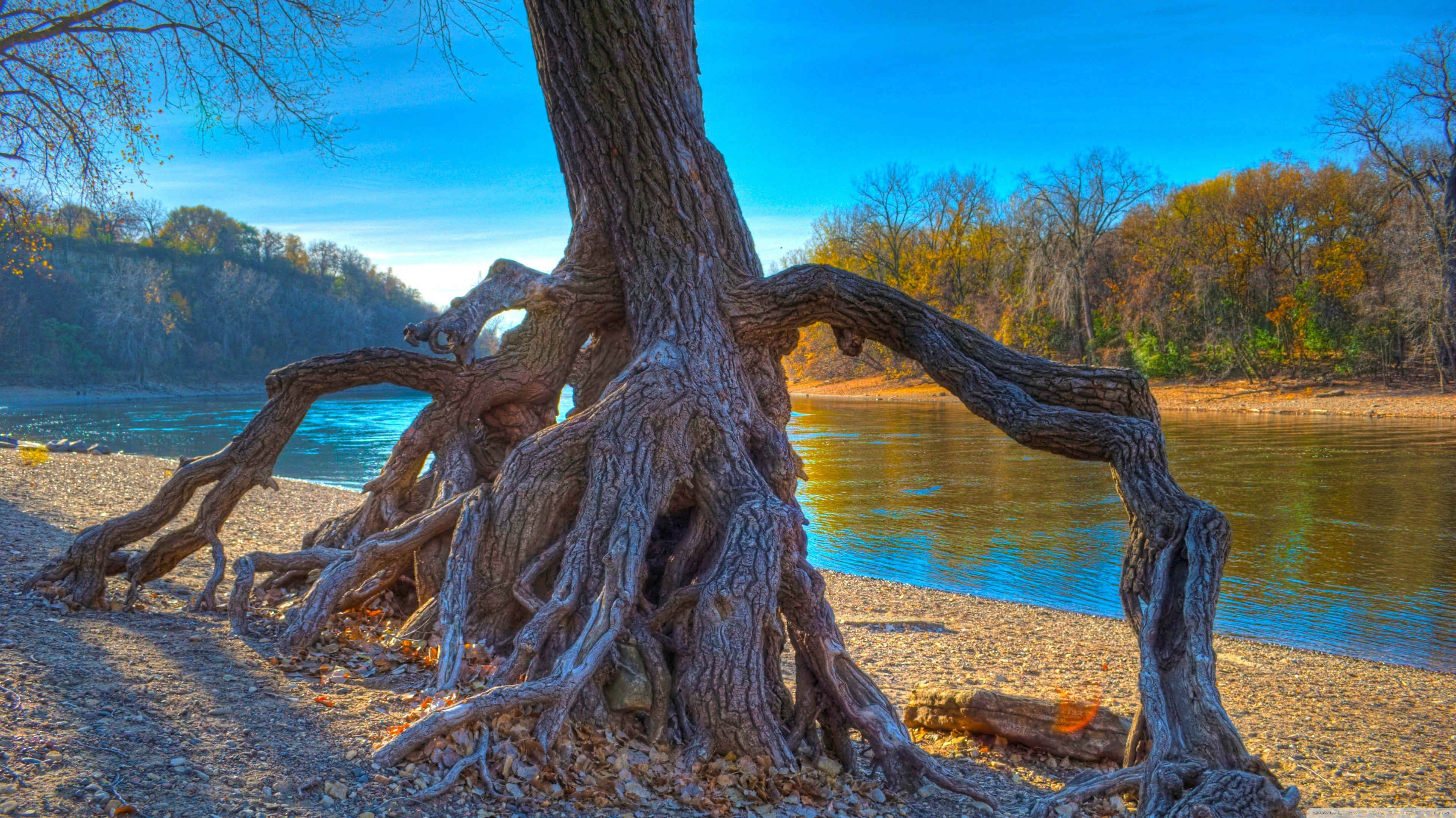 Beautiful Trees Wallpapers for Desktop beautiful nature