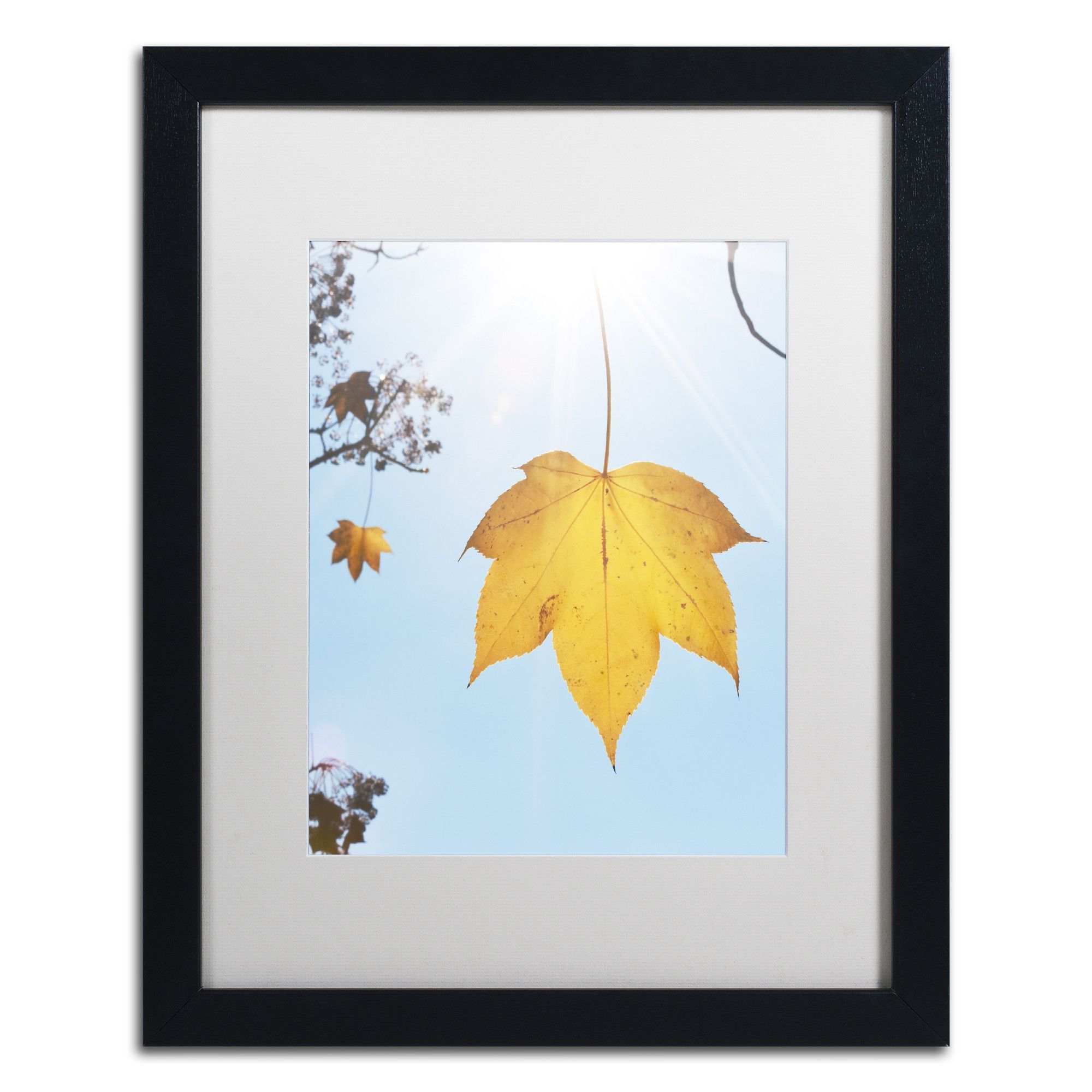 Autumn Leaf in the Sun by Kurt Shaffer Matted Framed Photographic Print