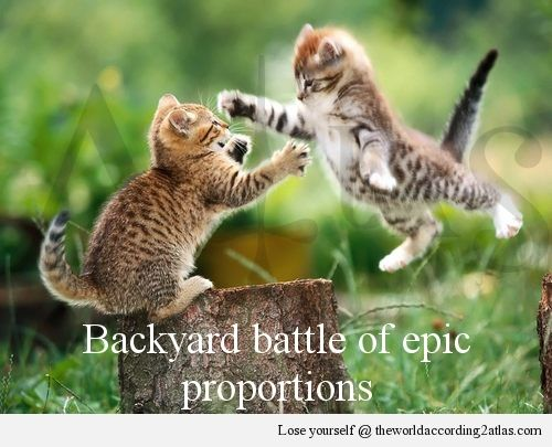 Atlas Catfight Smile About Animales Gatos Perro Gato