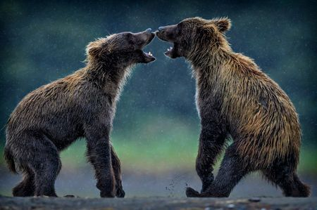 Juvenile Challenge Photo by Eric Esterle — National Geographic Your Shot