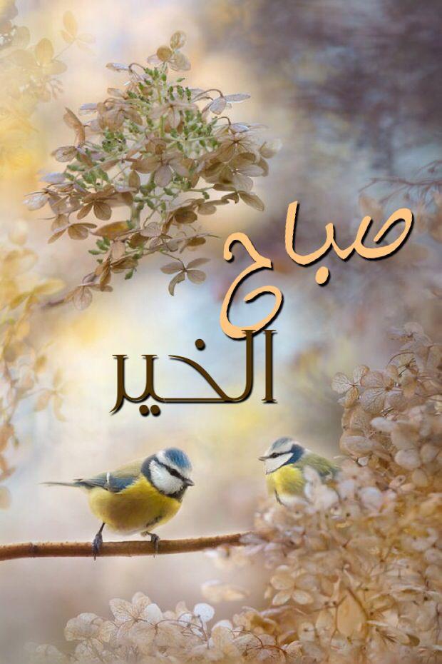صباح الخير Beautiful Birds Pretty Birds Bird