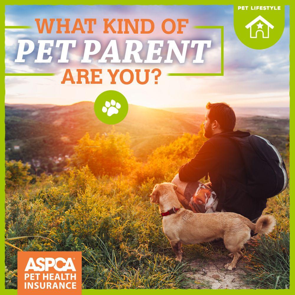 Quiz What Kind Of Pet Parent Are You Pet Parent Pets Dog Care
