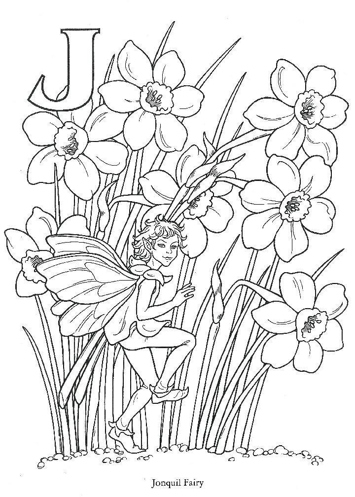 j is for jonquil daffodil fairy spring