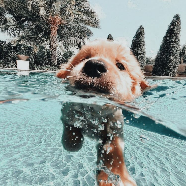 Image about summer in dogs by maria leonidou on We