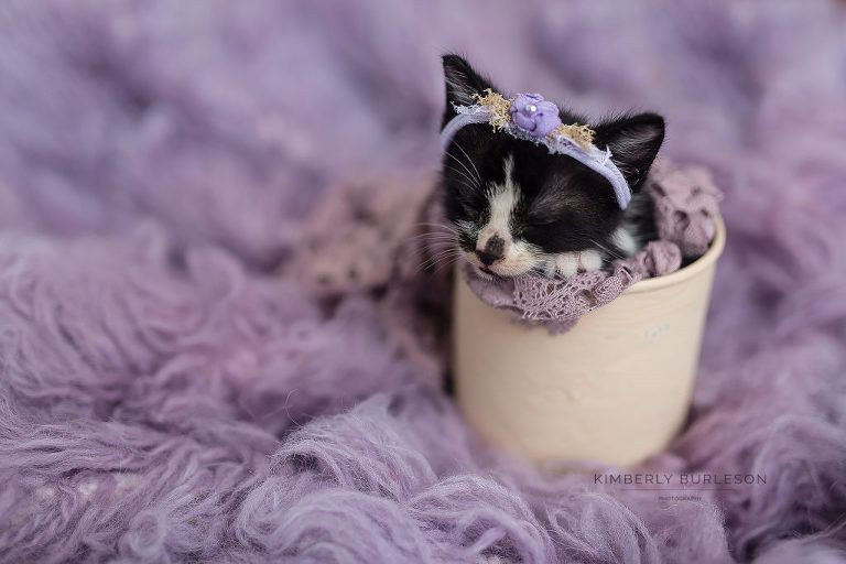 Newborn Kitten Photoshoot Kimberly Burleson Photography Newborn Kittens Newborn Animals Puppy Photography