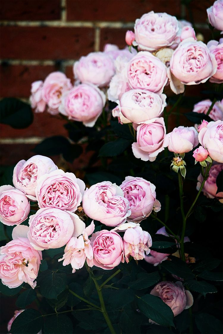 Apr 16 100 How Does Your Garden Grow Pink Roses Flowers And Gardens