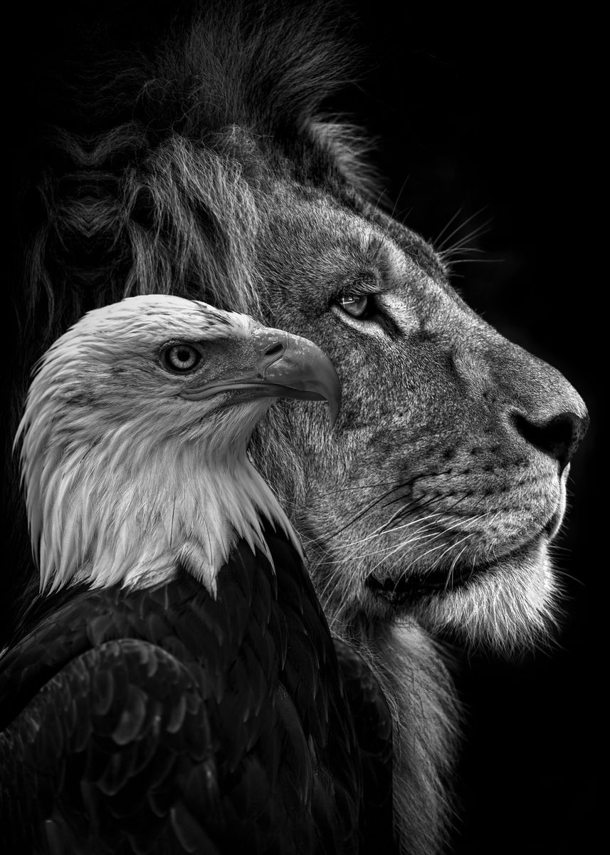 Black Lion And Eagle Faces Poster Print By Mk Studio Displate In 2021 Eagle Face Lion Photography Lion Head Tattoos Eagle black and white hd wallpaper