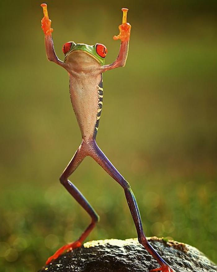 Quand la nature décide de dire « fuck », cest vraiment drôle ! Photos garanties sans retouches !