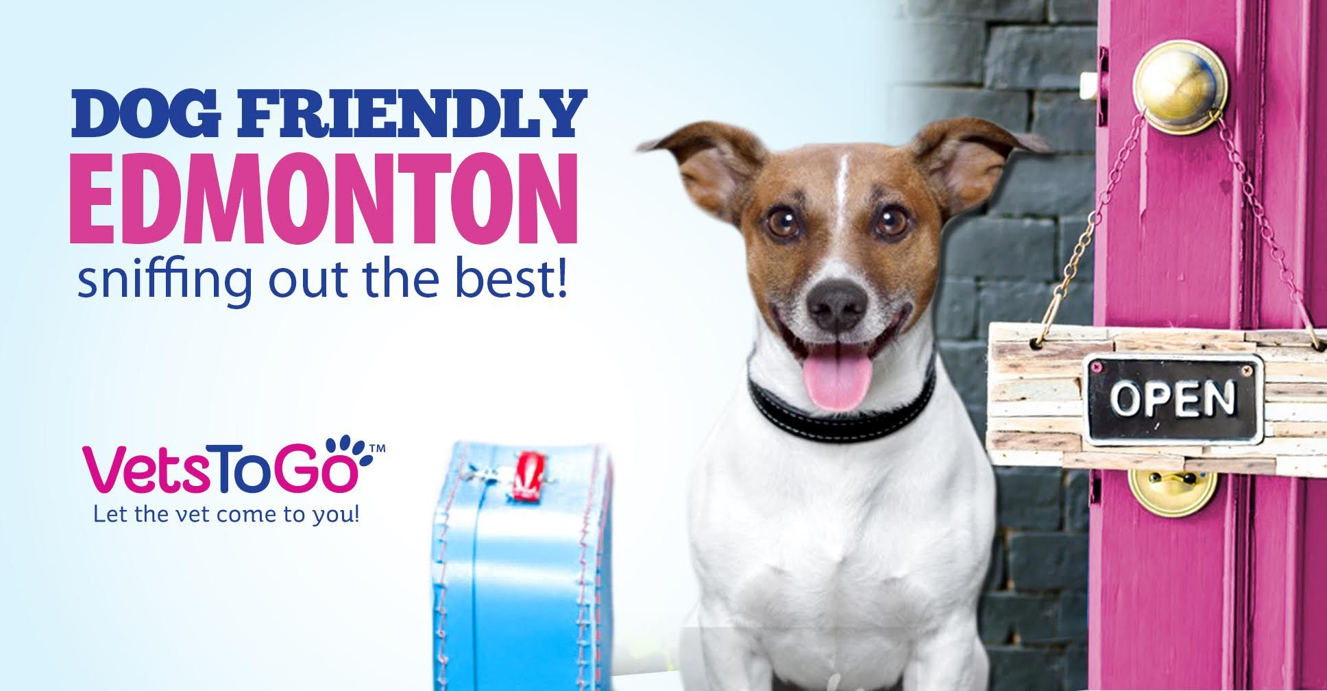 Dog Friendly Edmonton Sniffing Out The Best Pet Friendly
