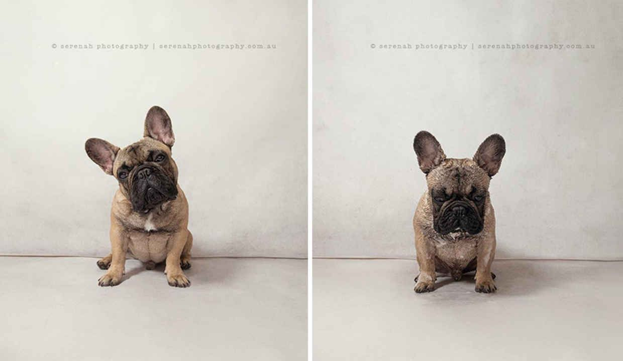 Photographer Captures Dogs Before After Bath Time In Hilarious - Loveable dog portraits capture mans best friend from a funny perspective