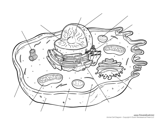 cell animal cell model diagram project parts structure labeled