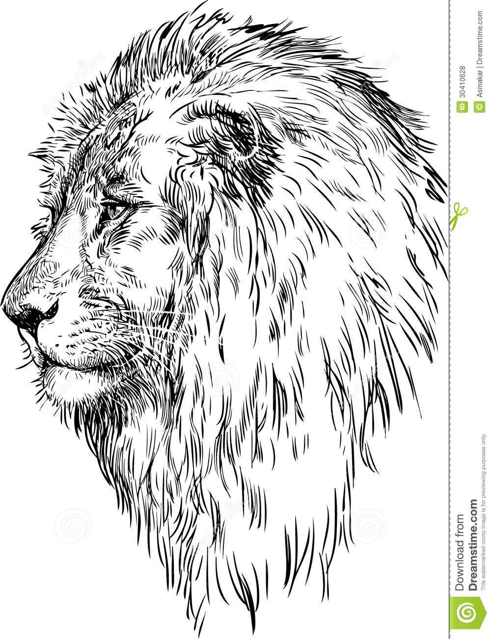 Résultat De Recherche D Images Pour Dessiner Lionne De