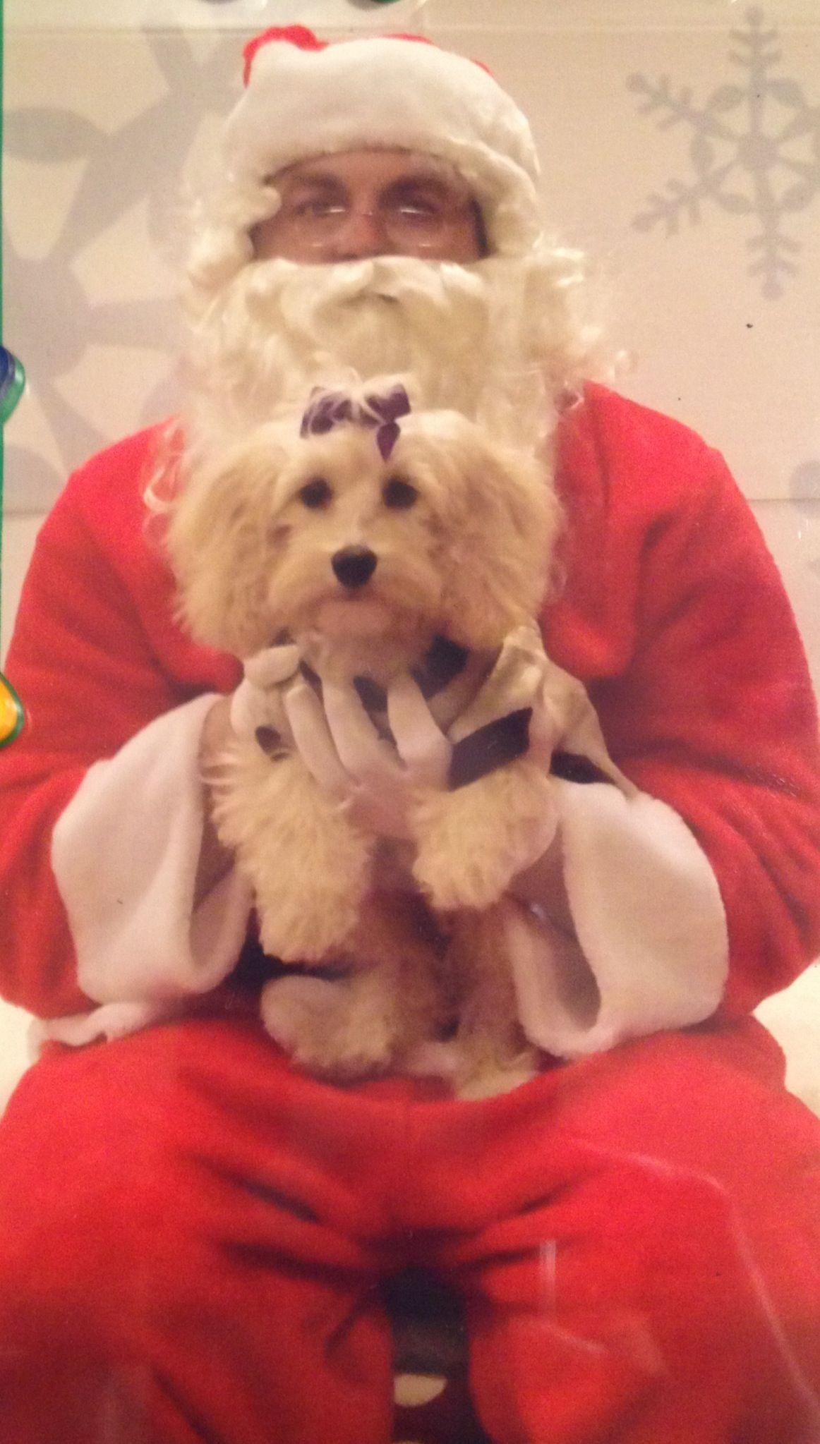 Chloe's first Santa picture!  #pinitforpetsmart