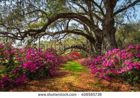 Charleston, South Carolina Spring Flowers - NATURE - BEAUTIFUL SCENERY