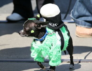 7 Tips for a Safe St. Patrick's Day with Your Dog